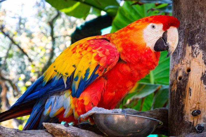 Macaw min