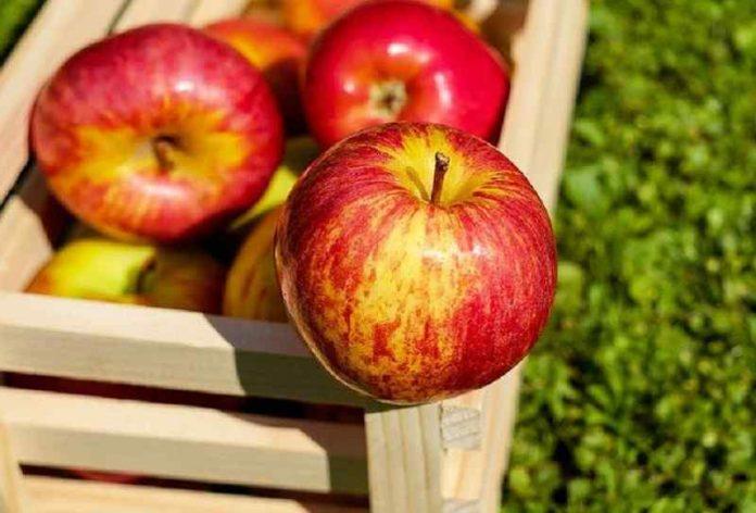 apple a day keep doctor away