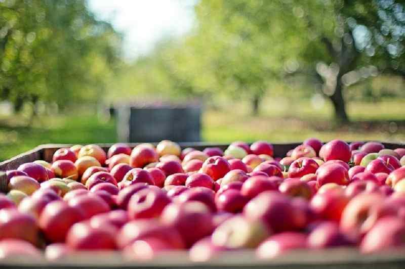 daily an apple keep doctor away