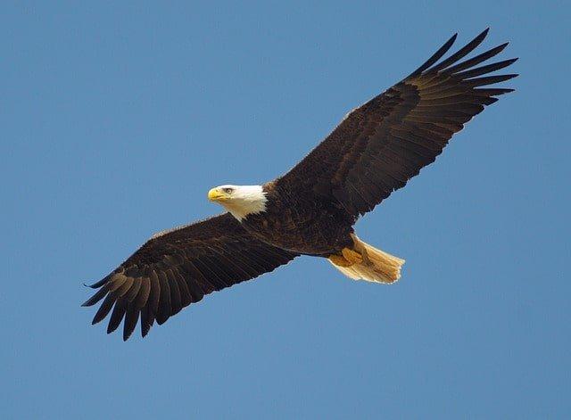 eagle 864725 640 min