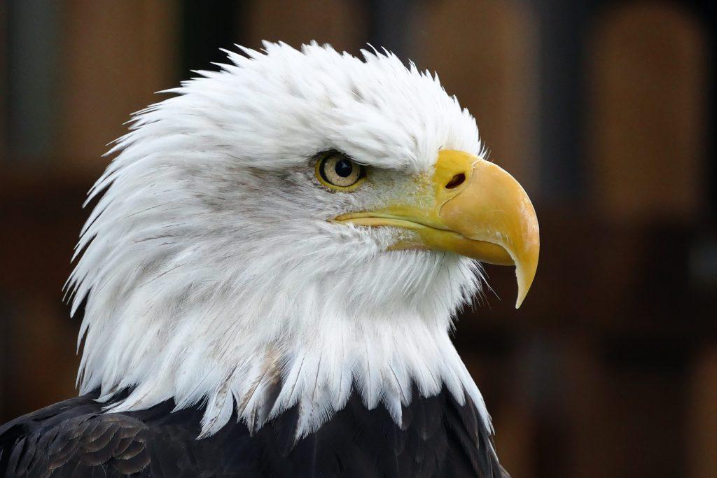 eagle eye min