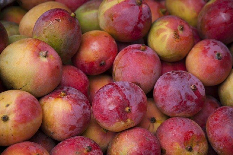 mango fruits benefits