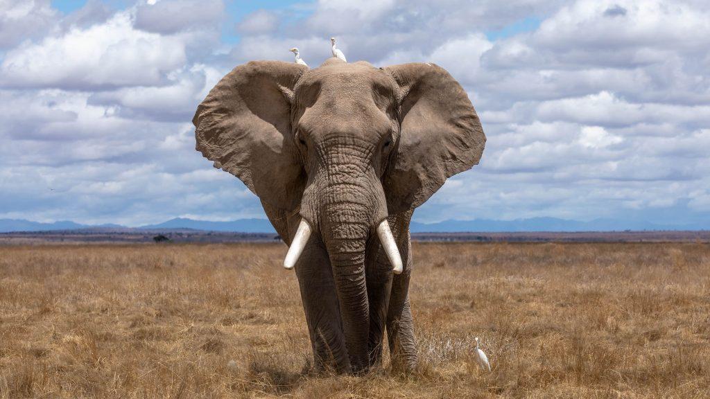 Elephant min