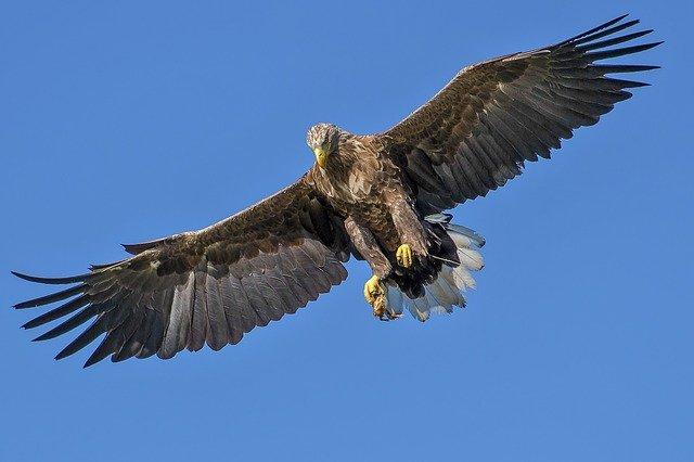 eagle min